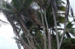 Tanquila Beach