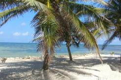 Rio Indio Palms