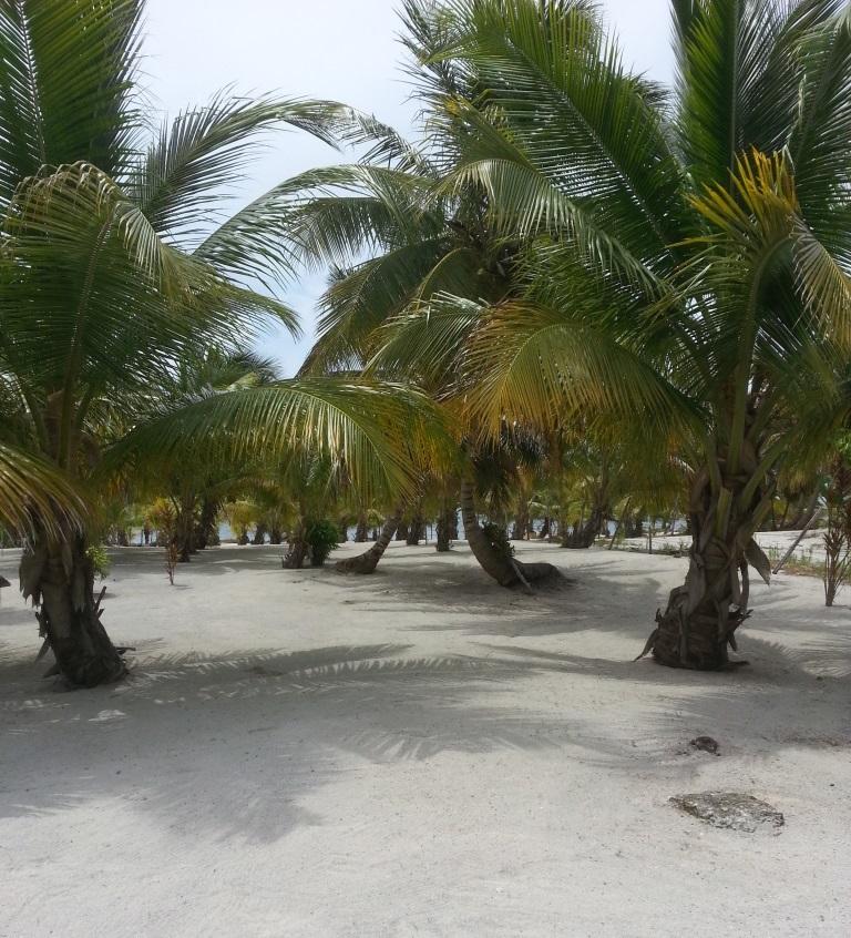 Costa Maya Tres Palmas