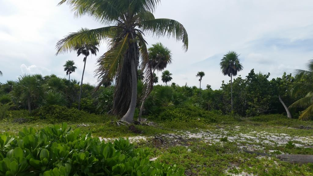 Uvero Paradise Beach