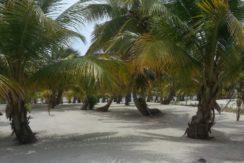 Costa Maya Tres Uvas