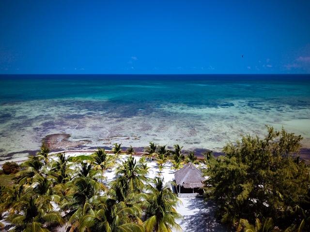 Costa Maya Palms