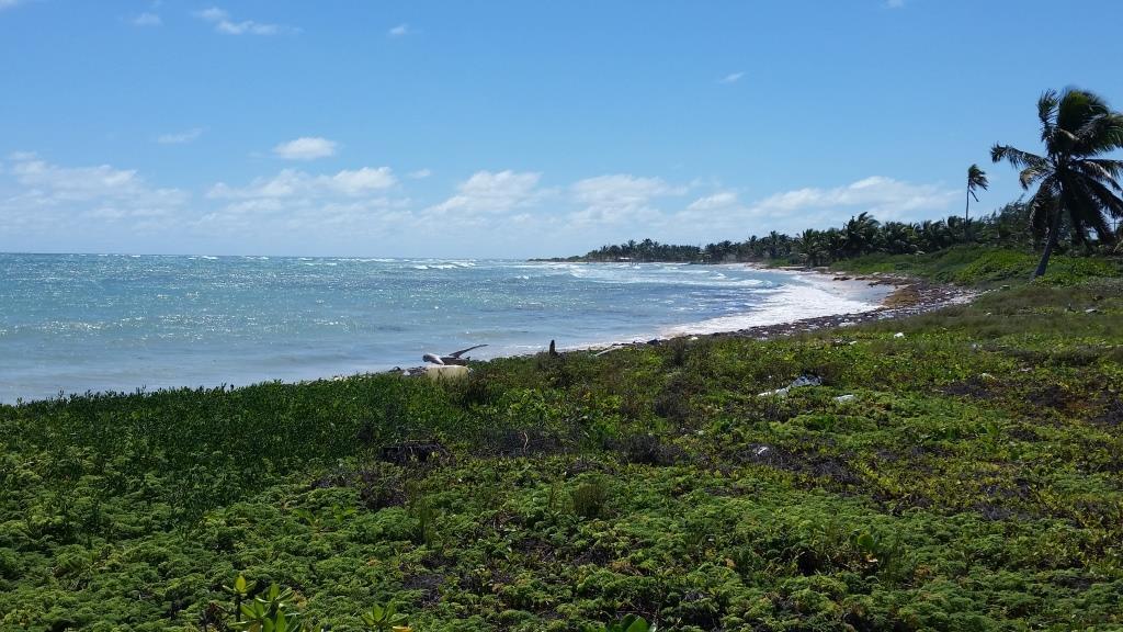 Coconut Beach Gem